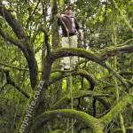 Climbing Shire Tree Ad Dynamo